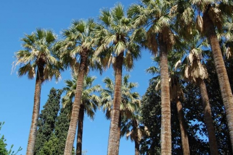 Palms at National Garden